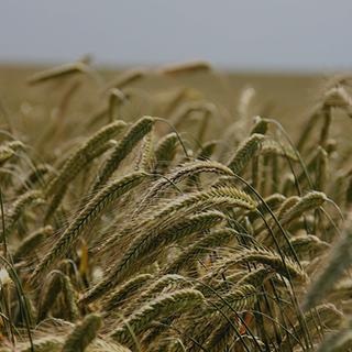 Agri/Agro